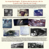 images/Expo50A/Panel-06-Espeleologia.png
